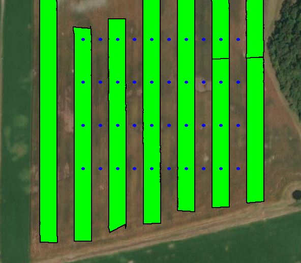 sample layout of a strip trial
