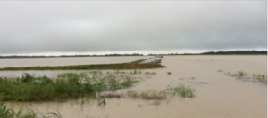 flooded Mississippi field