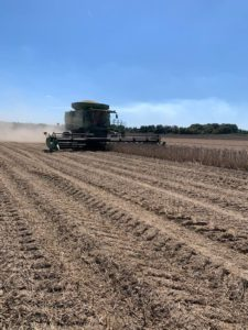 phillips county, arkansas, soybean harvest